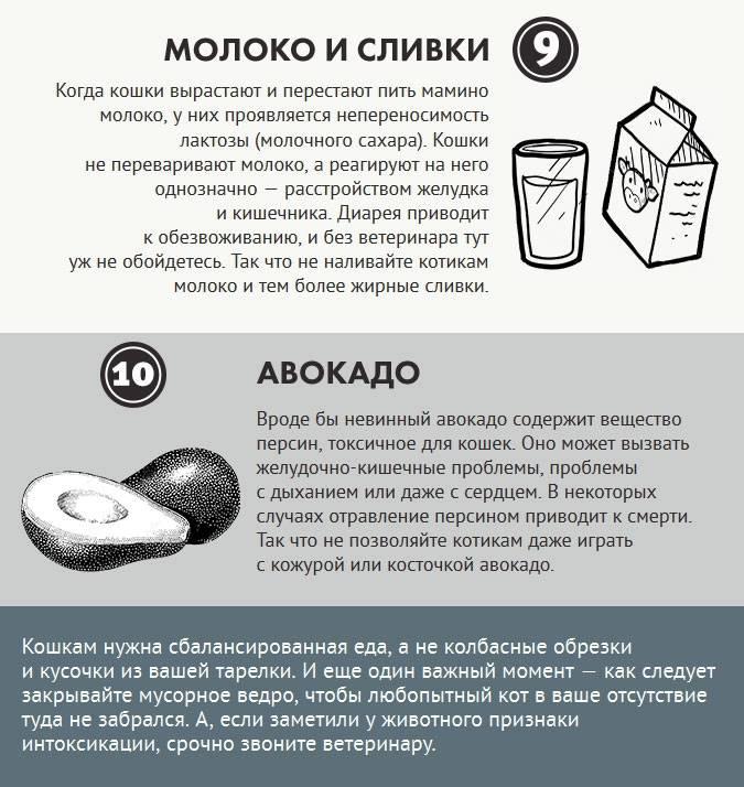 Чем нельзя кормить кошек: список запрещенных продуктов