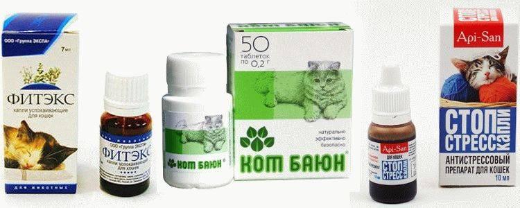 Успокоительное для кошек: в домашних условиях, препараты