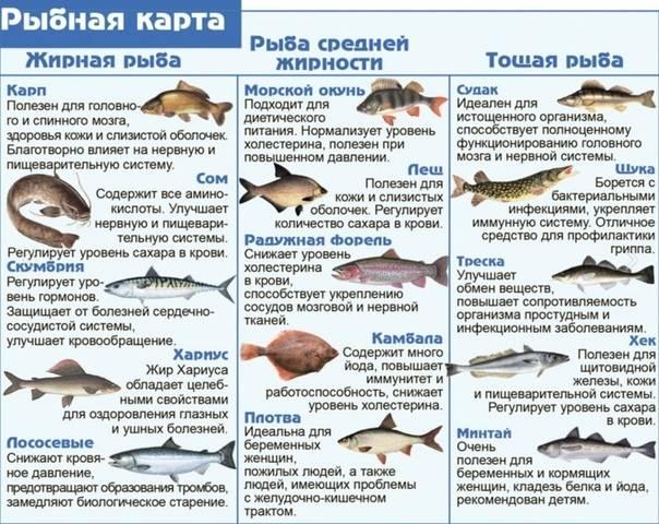 Какую рыбу можно давать кошкам, почему они ее любят, кормят ли ею кастрированных котов?