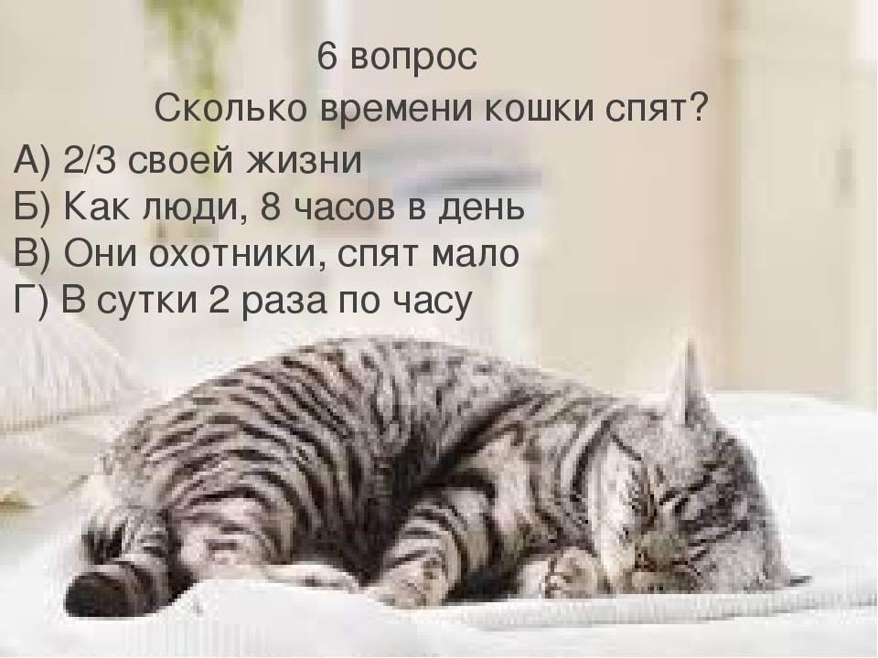 Сколько спят кошки в сутки в среднем: количество часов, которое котята и взрослые коты тратят на сон
