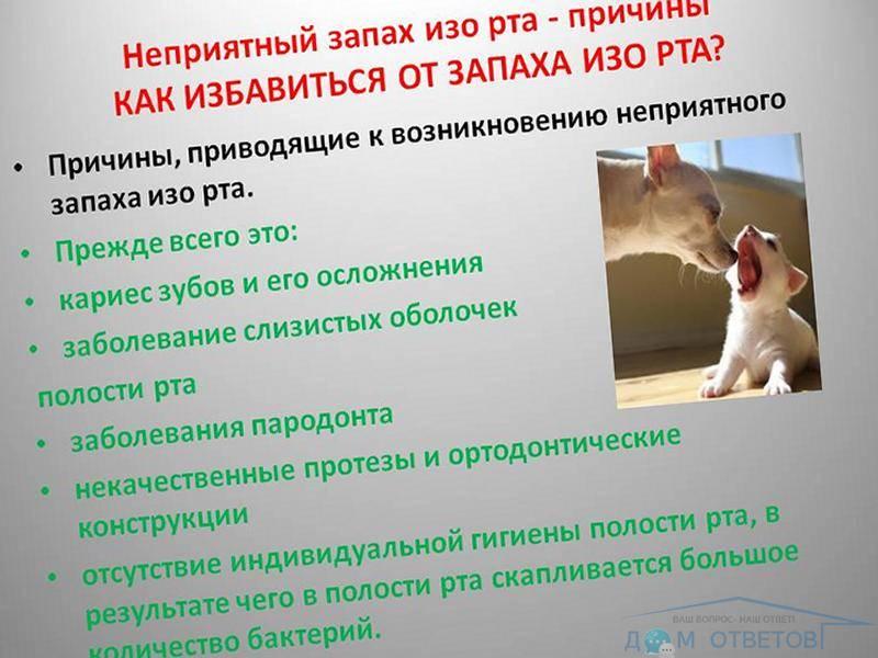 Что делать если у котенка изо рта запах ацетона? — о животных на чистоту