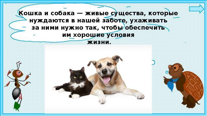 Почему кошки боятся собак?