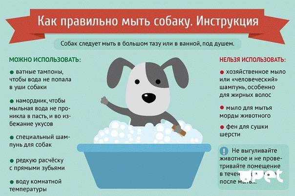 Как помыть кота, котенка или кошку в домашних условиях - видео уроки