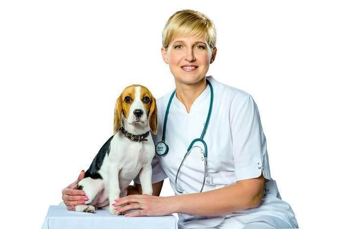 Лучший ветеринар москвы — о своей работе