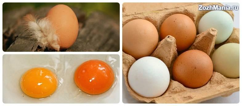 Можно ли котам давать яйца (сырые и вареные)?   кот и кошка