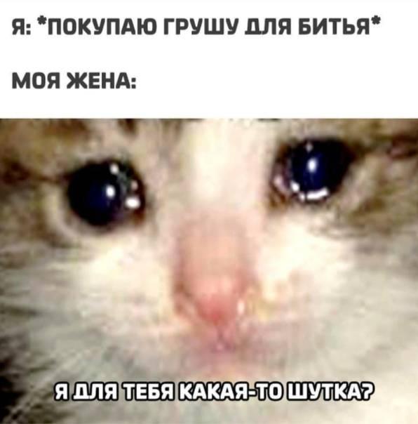 Котенок все время плачет что делать. почему кошка плачет: причины, лечение. проблемы со здоровьем