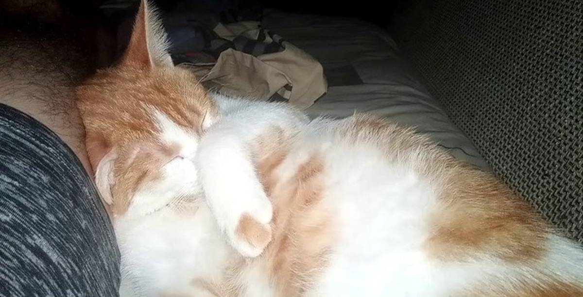 Кошка храпит во сне: причины, породы кошек склонные к храпу, возможная опасность, лечение