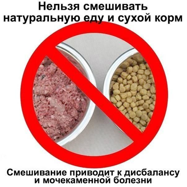 Можно ли кормить собаку кошачьим кормом?