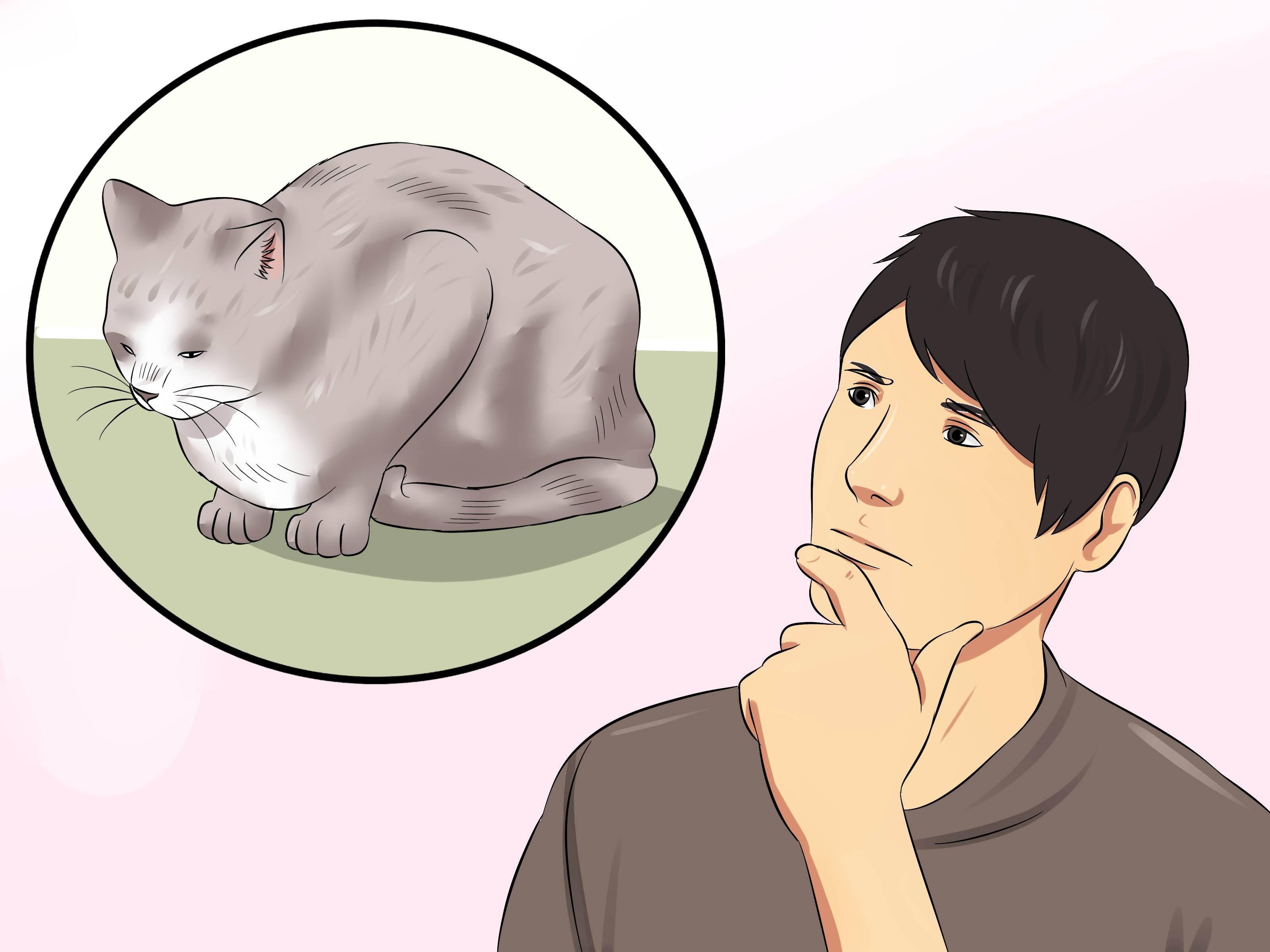 Гипертиреоз у кошек: причины, симптомы, лечение гипертиреоз у кошек: причины, симптомы, лечение