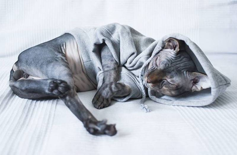 Какая должна быть температура тела у со — книга о собаках