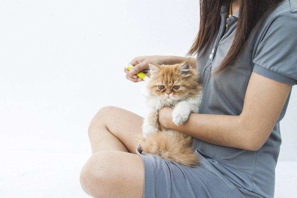 Аллергия на кошек: причины, симптомы, лечение