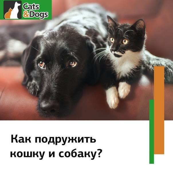 Кто умнее: кошки или собаки? у какого животного интеллект выше и почему? по каким признакам это можно понять?