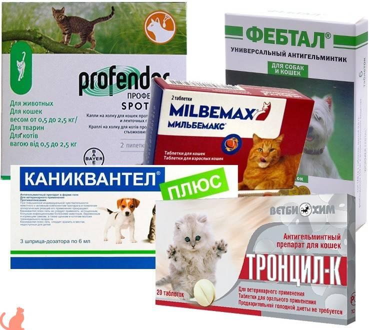 Подробный список симптомов глистов у кошек и котов