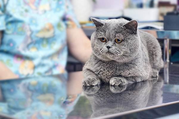 Цистит у кошек и котов – симптомы и лечение