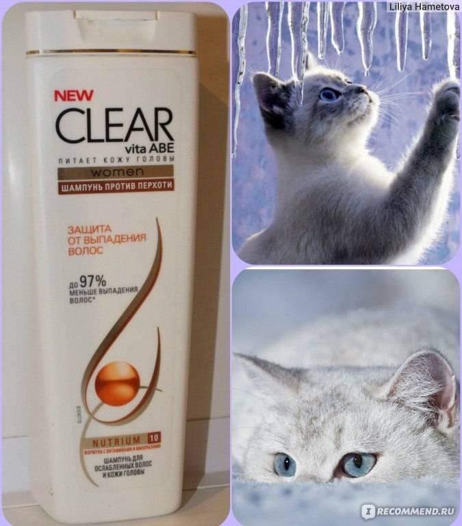 Шампунь для кошек: как выбрать и пользоваться им?