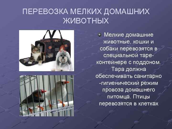 Как перевезти кошку в самолета в россии: правила и нормы провоза