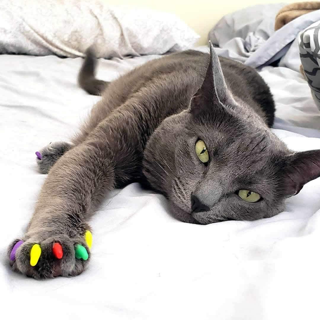 Антицарапки накладки для кошек и маленьких котят - силиконовые колпачки и насадки на когти