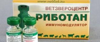 «флексопрофен» для собак и кошек: инструкция по применению