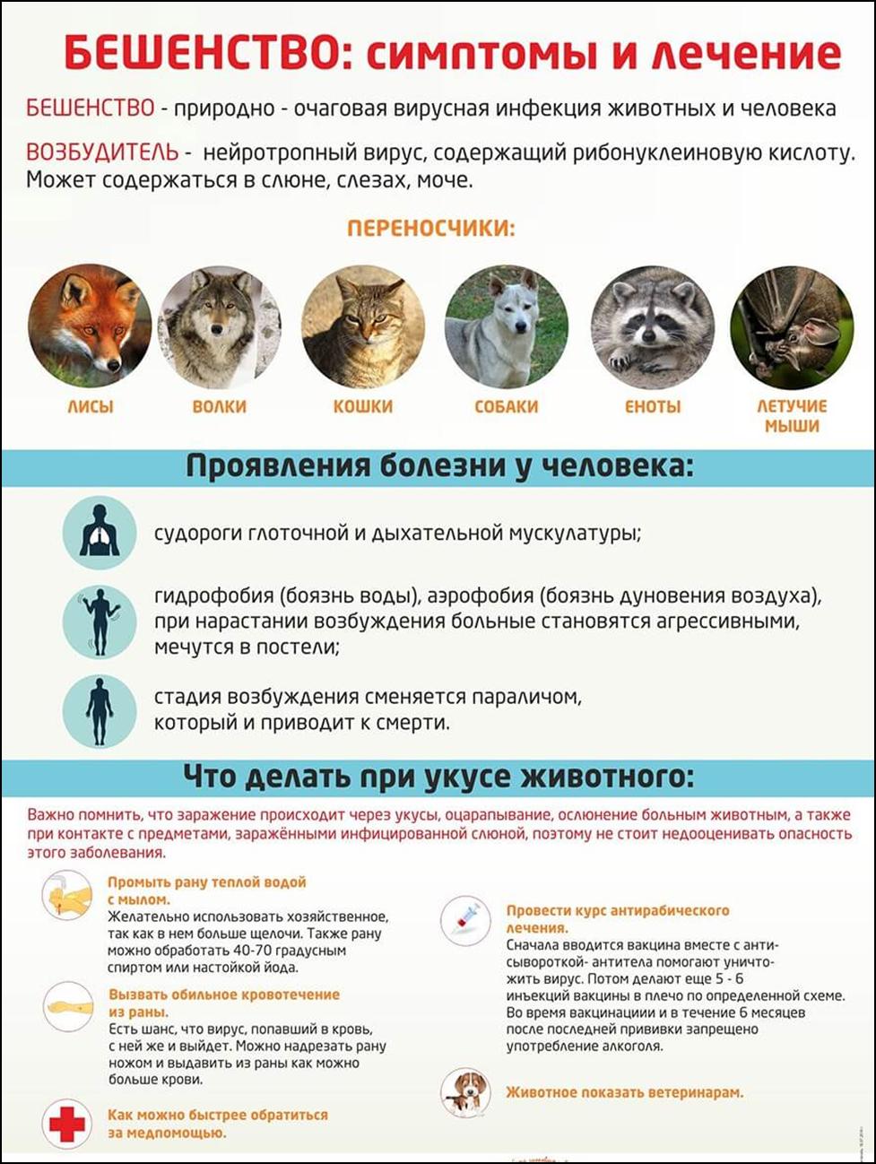 Бешенство у кошек. 14 симптомов которые помогут определить