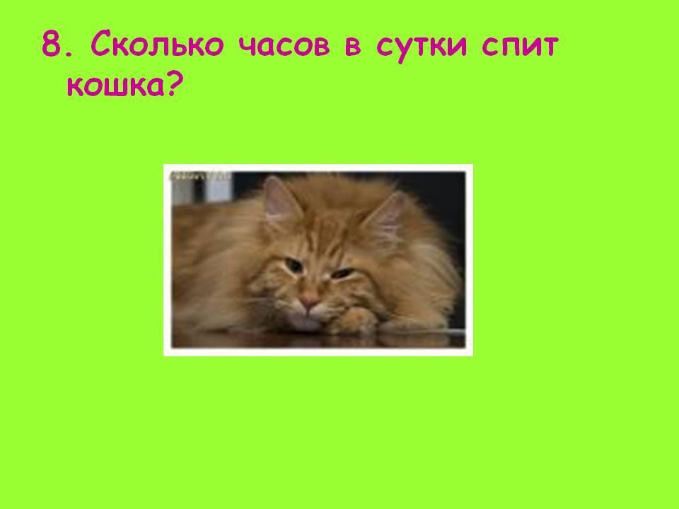 Продолжительность сна у кошки