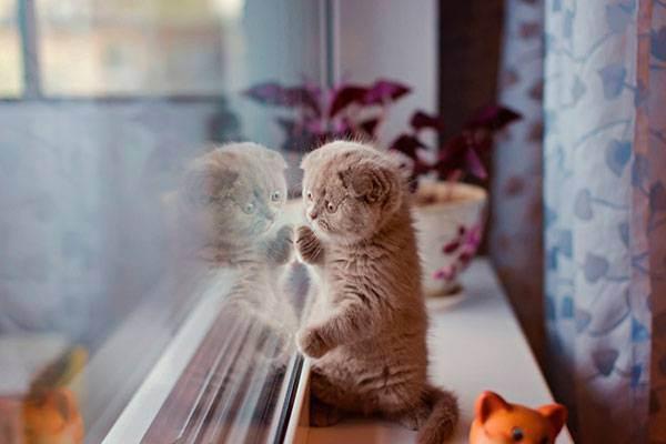 Можно оставлять кошку одну на месяц. как оставить кота дома на время отпуска