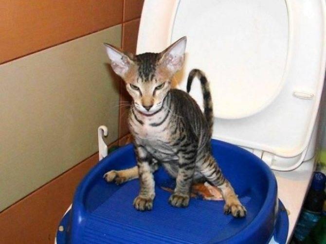 Как приучить котенка к рукам