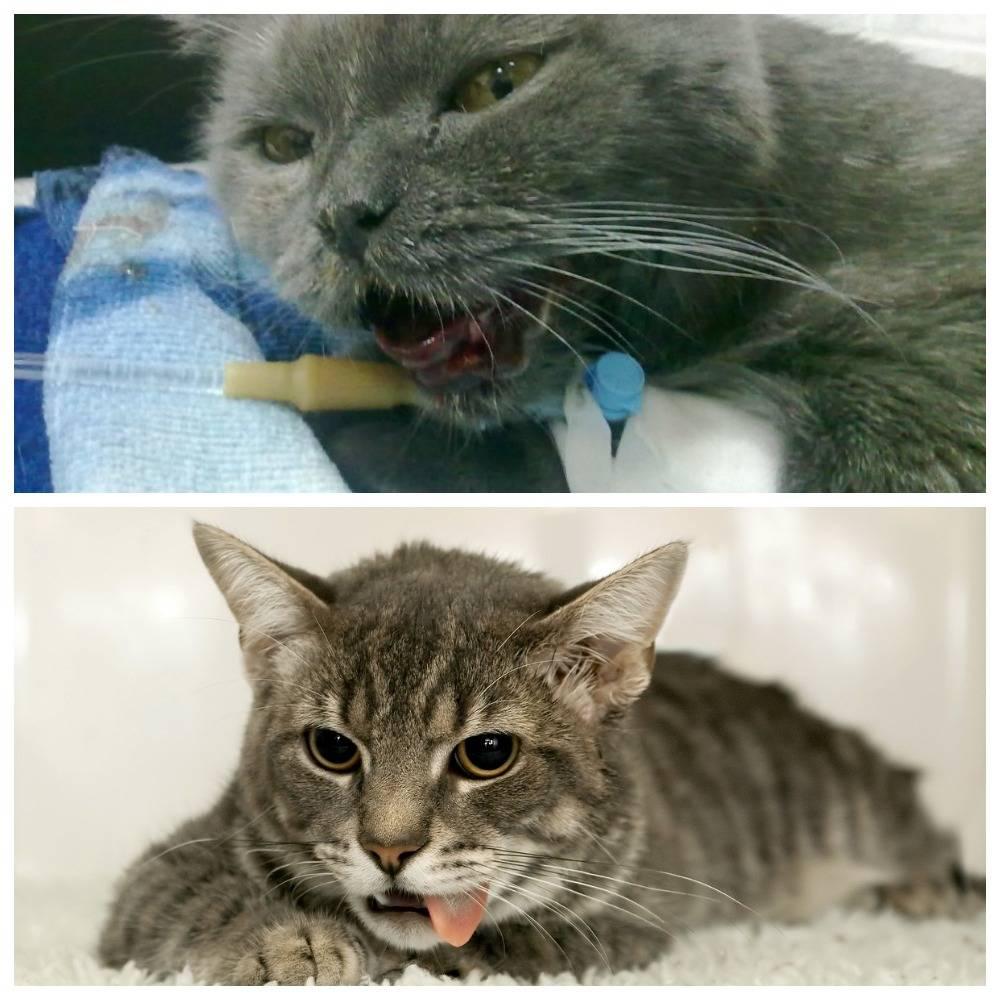 Гастрит у кошек, причины, симптомы, методы лечения, профилактика