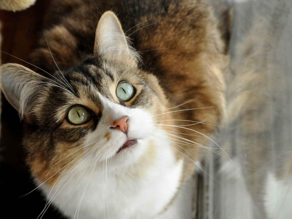 Почему у кота или кошки текут слюни изо рта | слюноотделение