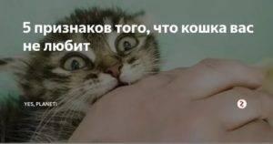 Признаки проявления кошачьей любви к человеку