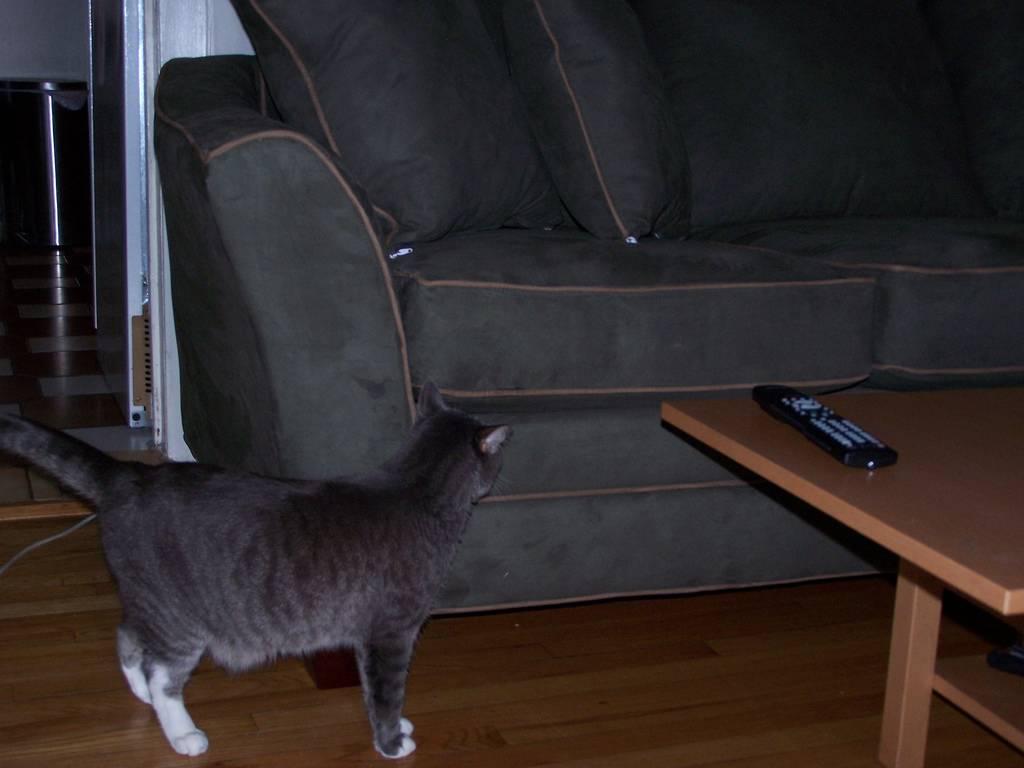 Кот написал на диван: как убрать запах кошачьей мочи?