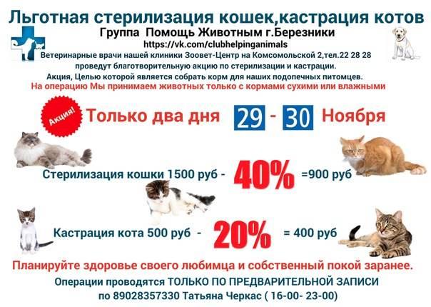 Стерилизация кошек: когда лучше делать, плюсы и минусы стерилизация кошек: когда лучше делать, плюсы и минусы