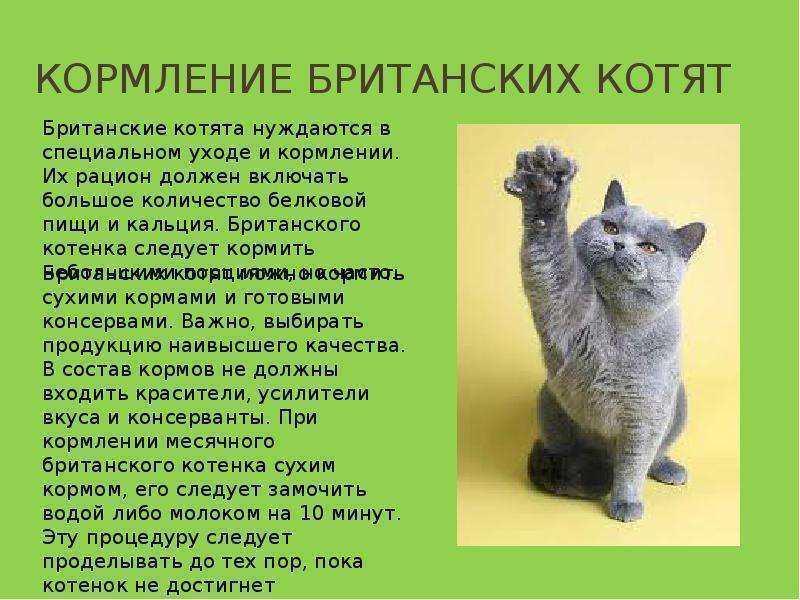 Чем кормить котенка при поносе: список полезных и правильных продуктов