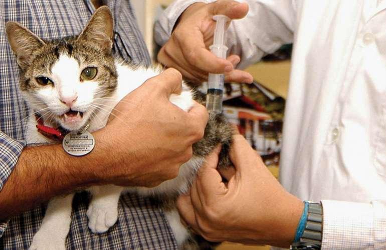 Есть ли прививка кошке от токсоплазмоза