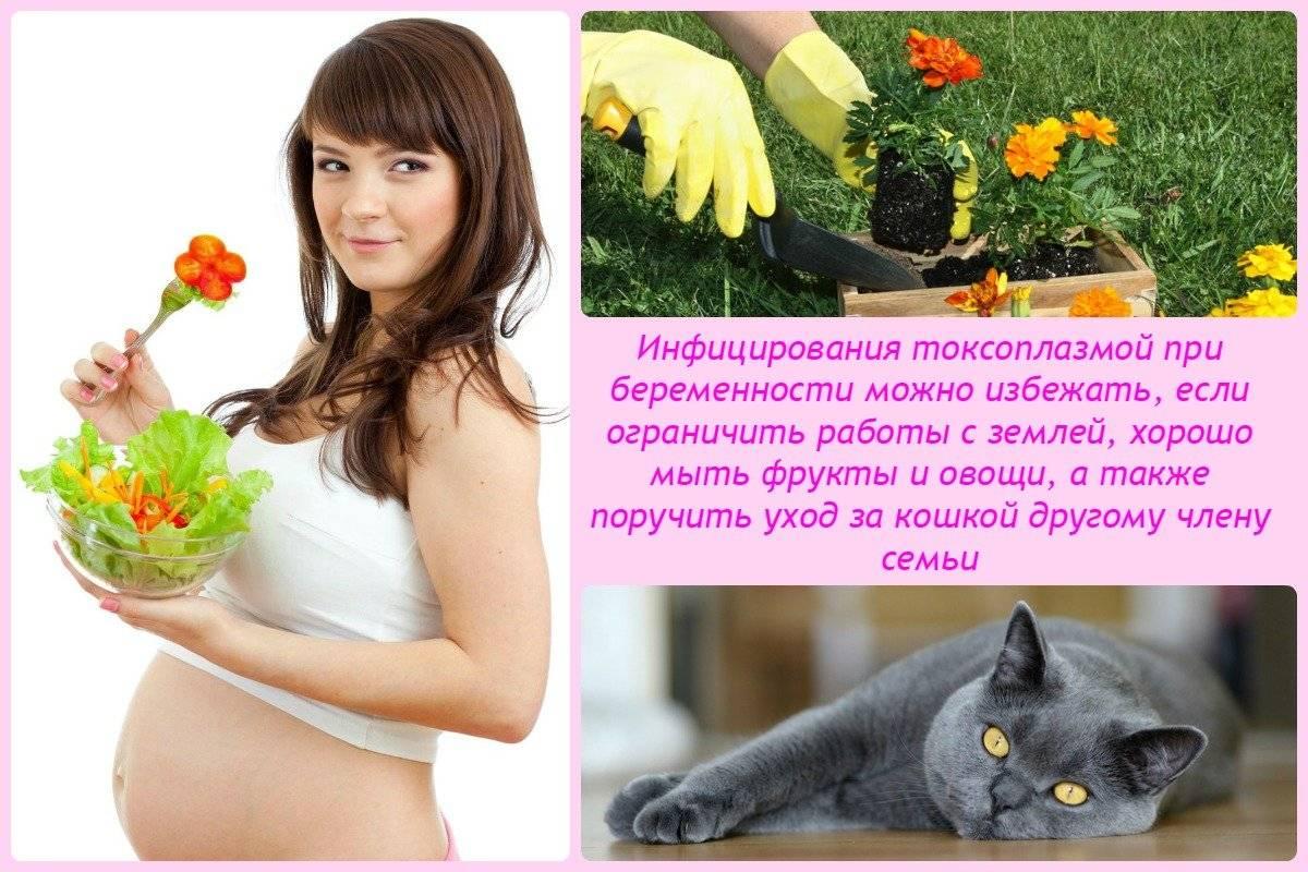 Верные приметы с кошками для беременных