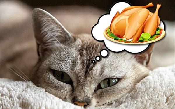 Чем кормить кошку после отравления – диета и питьевой режим - о болезнях
