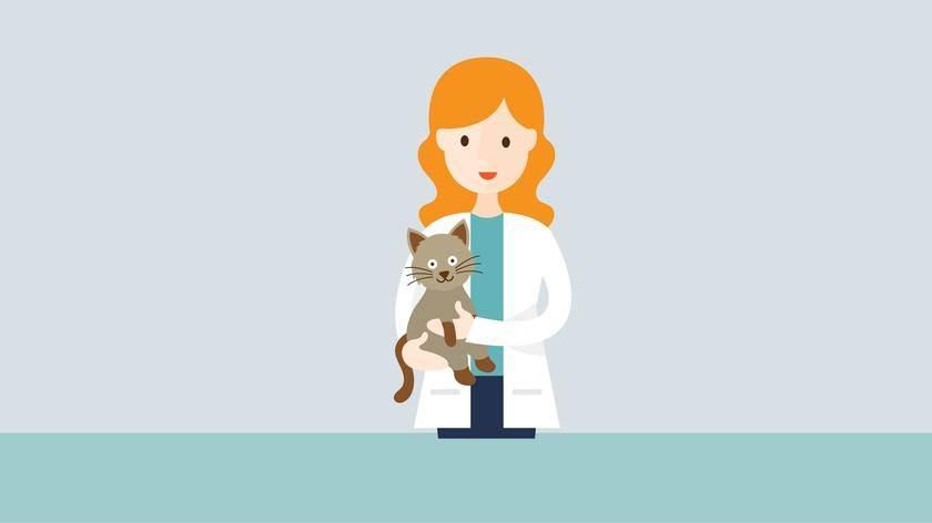 Симптомы и лечение мочекаменной болезни у котов в домашних условиях
