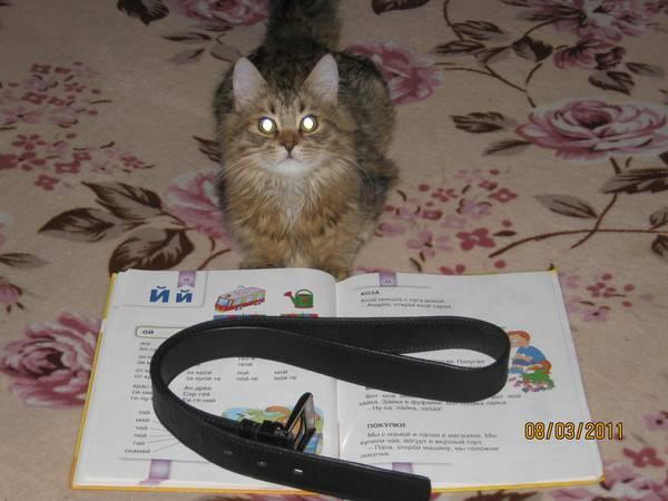 Почему в некоторых домах кошки не приживаются : причина может быть весьма серьезной