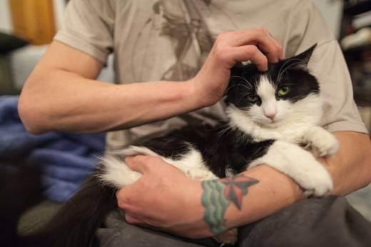 Почему котенок не какает