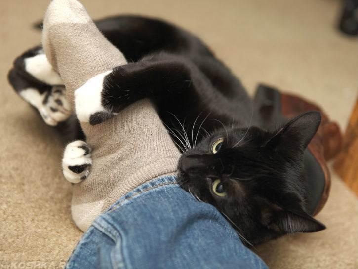 Почему кот кусается без причины