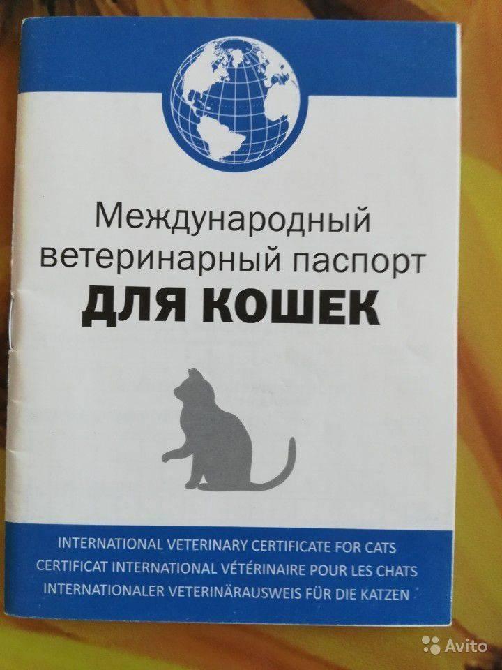Ветеринарный паспорт для кошки: нюансы оформления документа