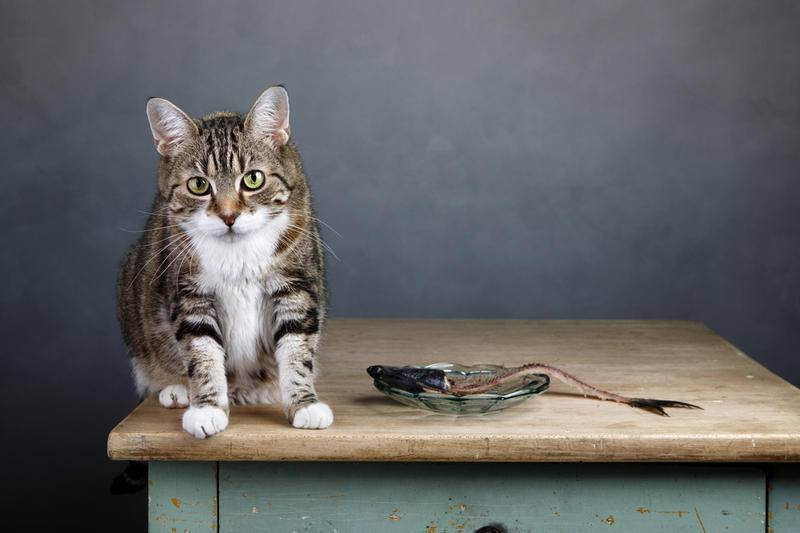 Как ест кошка: интересные факты