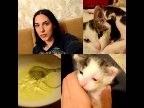 Как промыть нос кошке: от соплей и других нежелательных выделений, физраствором или хлоргексидином, можно ли вообще чистить самостоятельно