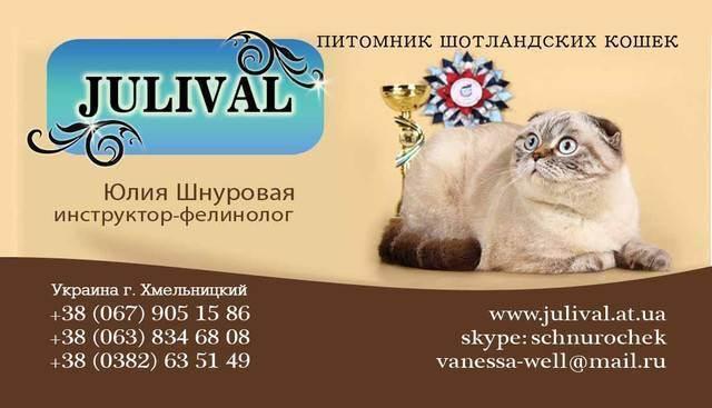 Разведение кошек как бизнес? выгодно или нет?