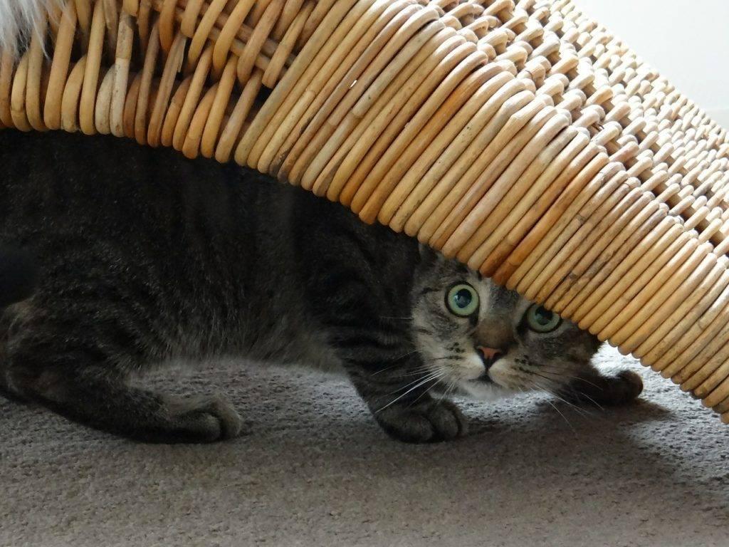 Чего боятся кошки – список самых распространенных кошачьих фобий