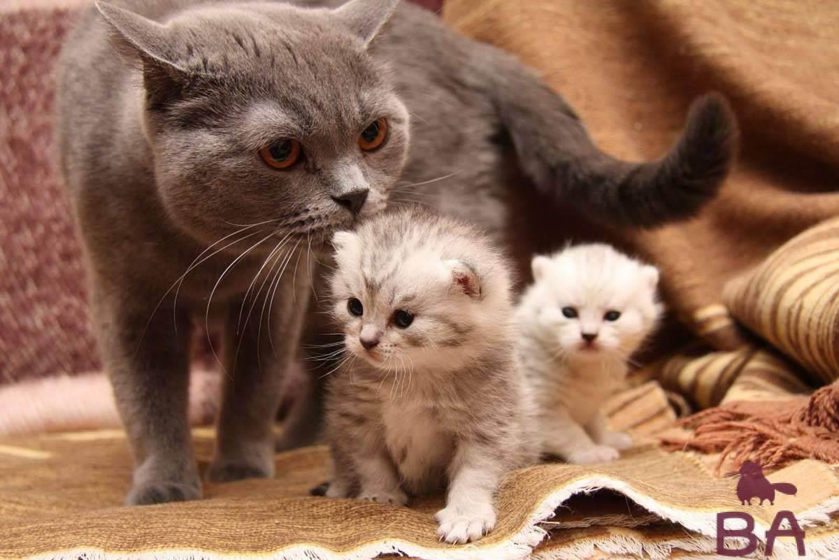 5 причин почему кошки едят своих котят
