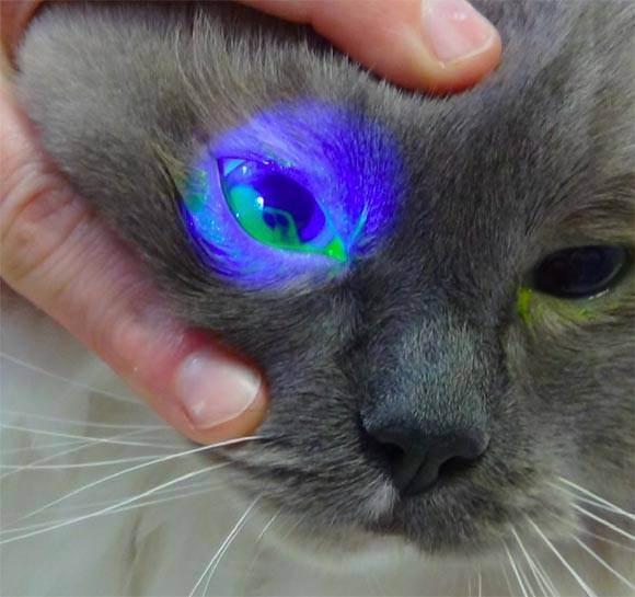 У котят гноятся глаза: что делать с глазами, как лечить, необходимые препараты и рекомендации ветеринаров - sammedic.ru