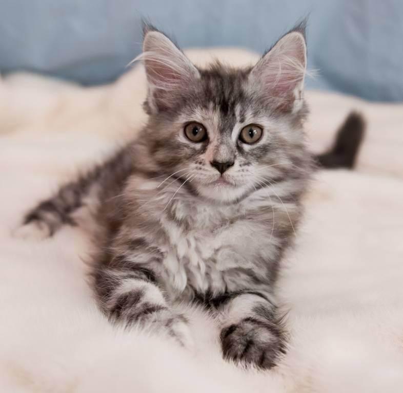 Как приучить кота к новому месту жительства? правила адаптации питомца