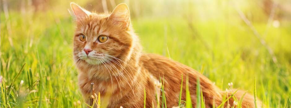 Продукты вредные для кошек