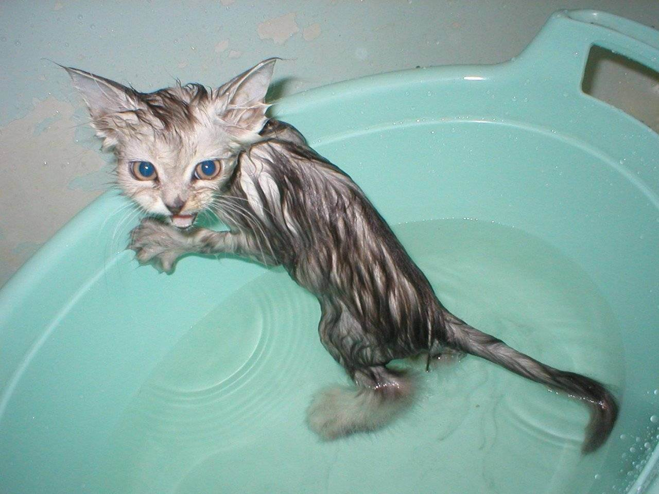Как купать маленького котенка