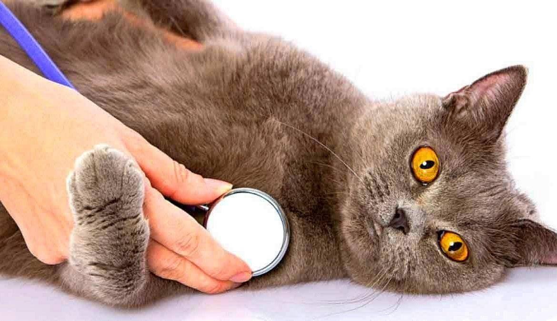 Как лечить кошек от кашля и чихания